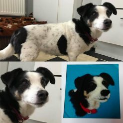 Needle felted pet portraits in 2 D
