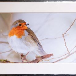 A4 Winter Robin Print