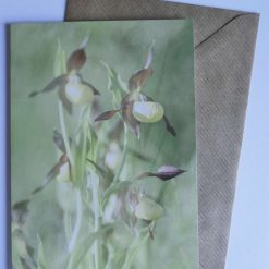 Lady's Slipper Orchid Card