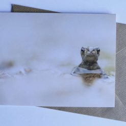 White Tailed bumblebee Card