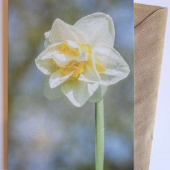 Double Flowered Daffodil Card