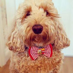 Cute Buns bow tie 1