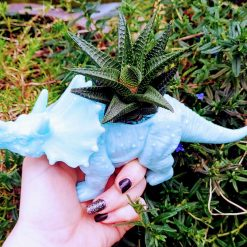 Established Haworthia succulent in funky blue dinosaur, with drainage