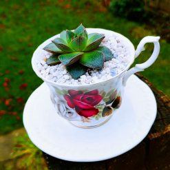 Beautiful fine china tea cup with lovely succulent rosette, with drainage