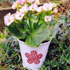 Flowering house plant in white hand decorated  bucket