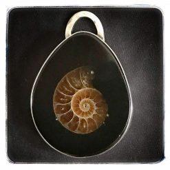 """""""Ammonite"""" pendant in 925 silver."""