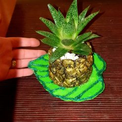 Cement pot with real succulent plant