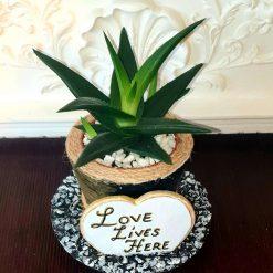 Decorative cement pot with real succulent plant