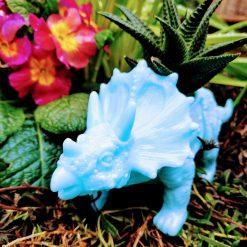 Funky blue dinosaur planter with well established beautiful Haworthia succulent