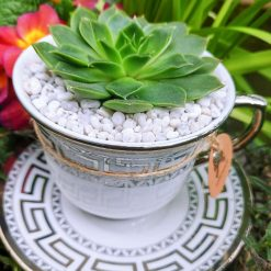 Beautiful tea cup with succulent, hole for drainage