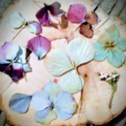 Dried, Preserved and Pressed Flowers