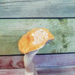 Ceramic Orange Crackle Mushroom