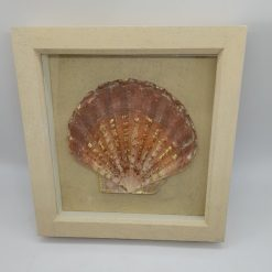 Collage - Gold leaf decorated scallop shell in sandy box frame