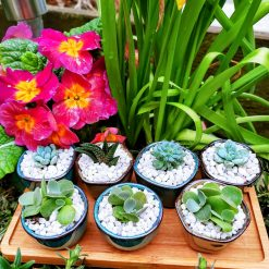 Cute mini pots with baby succulents - mix and match and bundle specials!