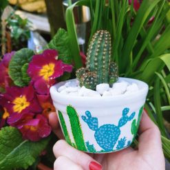 Cacti in hand painted white pot