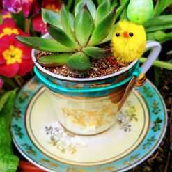 Beautiful china tea cup with succulent rosette, matching stones and Easter embellishments - yellow. With drainage hole.