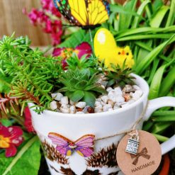 Gorgeous hardy succulents, alpines and sedums in pebbles & cactus soil, potted in beautiful hedgehogs design china mug, with drilled hole for drainage