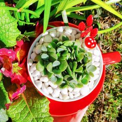 Succulent in cactus soil in lovely red tea cup and embellishments