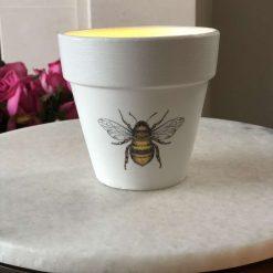 Medium bee plant pot