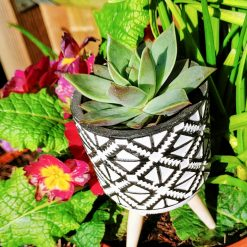 Gorgeous succulent in pebbles & cactus soil in plastic pot, placed in beautiful tribal style pot on wooden legs (tripod).
