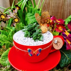 Gorgeous succulent in pebbles & cactus soil, potted in beautiful red ceramic tea cup, dressed with matching stones and butterfly embellishment.