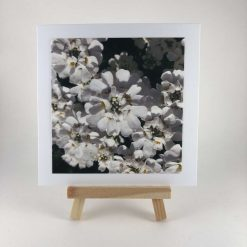 Candytuft Greetings Card