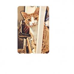 George's Peekaboo - A5 card