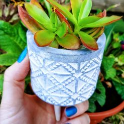 Gorgeous succulent in pebbles & cactus soil in plastic pot, placed in beautiful grey tribal style pot on wooden legs (tripod).