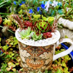Mixed hardy succulents, sedums & alpines in grit, perlite & cactus soil. Potted in a lovely brown art deco/artistic all over/ wrap around design fine china mug. Drilled hole in the bottom for drainage 2