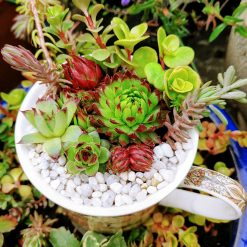Mixed hardy succulents, sedums & alpines in grit, perlite & cactus soil. Potted in a lovely brown art deco/artistic all over/ wrap around design fine china mug. Drilled hole in the bottom for drainage 1