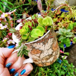 Mixed hardy succulents, sedums & alpines in grit, perlite & cactus soil. Potted in a lovely brown art deco/artistic all over/ wrap around design fine china mug. Drilled hole in the bottom for drainage 4