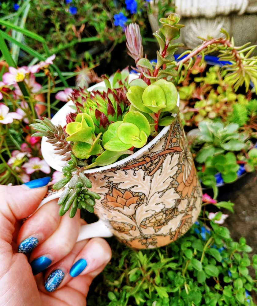 Mixed hardy succulents, sedums & alpines in grit, perlite & cactus soil. Potted in a lovely brown art deco/artistic all over/ wrap around design fine china mug. Drilled hole in the bottom for drainage