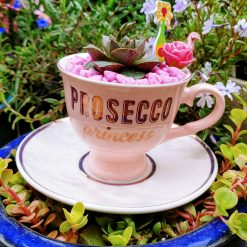 Gorgeous echeveria purposorum succulent rosette potted in beautiful 'Prosecco Princess' design china tea cup, with drilled hole for drainage, dressed with matching stones and embellishments ❤ Also available in a hamper!  For indoor use.