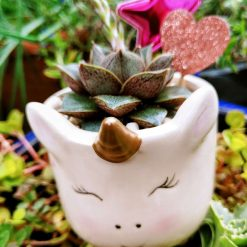 Gorgeous succulent rosette in pebbles & cactus soil, potted in cute small unicorn planter, with drilled hole for drainage