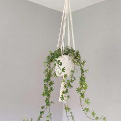 Macrame hanging  plant holder
