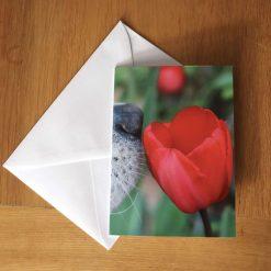 Theo- blank greeting card