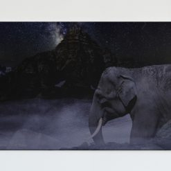 The Mystical Elephant Digital Art Poster