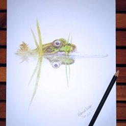 Iberian Water Frog Limited Edition Print
