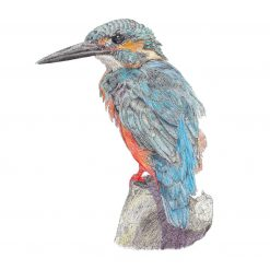 """Kingfisher Limited Edition Print Mounted 10""""x12"""" Print Fine Art, signed by the artist"""