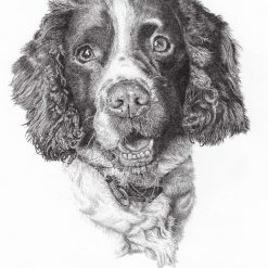 Pet Portraits and Commissions from Mark Cocker Art