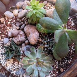 Large succulent terrarium