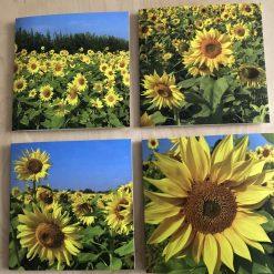 Pack of 4 Flower photo blank greetings cards greens