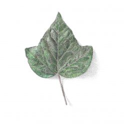 """Minatures Woodland Collection 'Leaf...' Limited Edition Print Mounted 9""""x9"""" Print Fine Art, signed by the artist"""