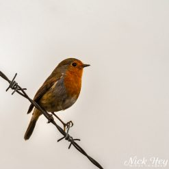 10x10 print titled Bird on a wire