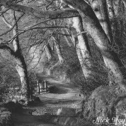 10x10 print titled Dreamy Woodland Walk