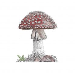 """Minatures Woodland Collection 'Mushroom...' Limited Edition Print Mounted 9""""x9"""" Print Fine Art, signed by the artist"""
