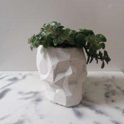 Concrete skull pot