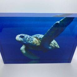 Ocean Turtle Acrylic Block