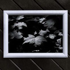 Leaf Art Print, Satin Finish Photo, Maple Leaf, A4 Size by Cornish Artist, Free UK Postage