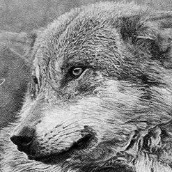 Monochrome Wolf DMC cross-stitch pattern. PDF download